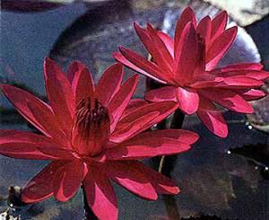 redflare